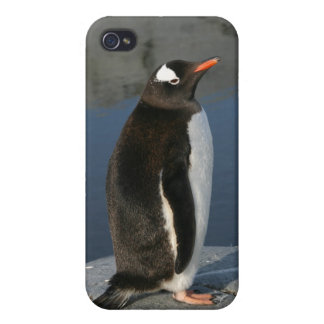 Gentoo pingvin iPhone 4 cover