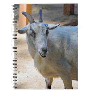 Get 540 anteckningsbok med spiral