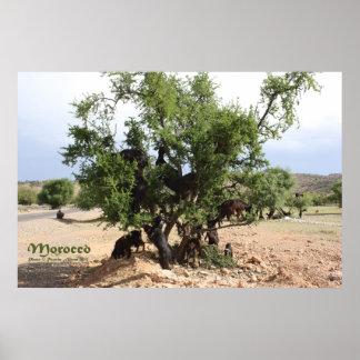 Getter i träd - Arganträd, Marocko Poster