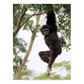 Gibbon som svänger från träd vykort