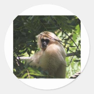 Gibbonapa Runt Klistermärke