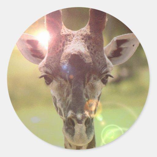 giraff rund klistermärke