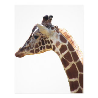 Giraffnacke och huvud brevhuvud