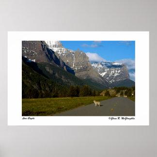 Glaciärnationalpark - Lone prärievarg Poster