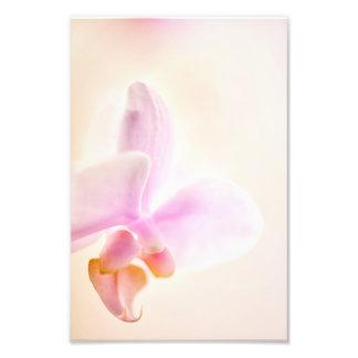 Glad gryning 'rosa Cheer för PhalaenopsisOrchid Fototryck