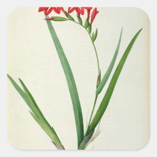 "Gladiolus Cardinalis, från ""Les Liliacees"", 1805 Fyrkantigt Klistermärke"