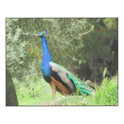 Glansig panel - påfågel på backen