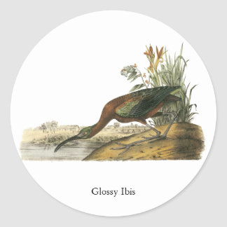 Glansiga Ibis, John Audubon Runt Klistermärke