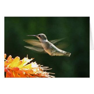 Glödhet Hummingbird Hälsningskort