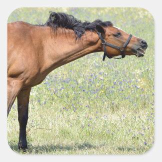 Gnägga för häst fyrkantigt klistermärke