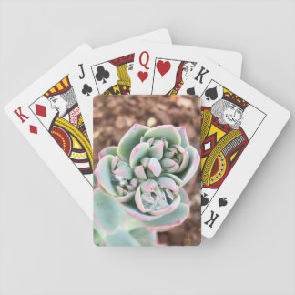 Gnistra Casinokort