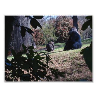 Gorilla Fototryck