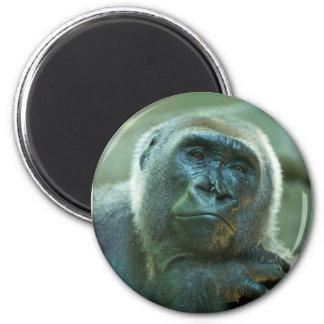 Gorilla - som matas upp magnet