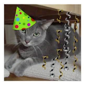 Grå katt för födelsedagsfest poster