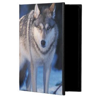 grå varg, Canislupus, i foothillsna av 3na iPad Air Skydd