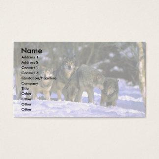 Grå Varg-packe på kanten av den snöig skogen Visitkort