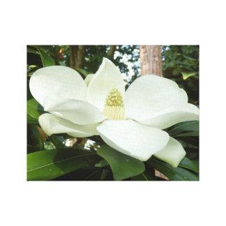 Grandiflora kanvastryck för Magnolia