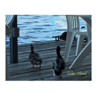 Gräsandet duckar sjömeaden Nevada Vykort