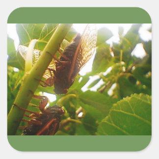 Gräshoppaland kvadrerar den glansiga klistermärken