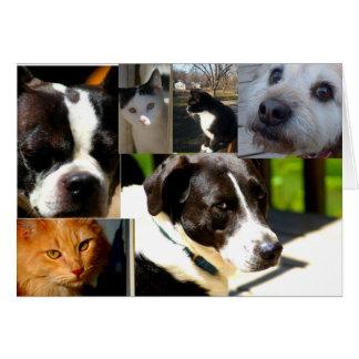 Grattis på att adoptera (djur, husdjur) hälsningskort