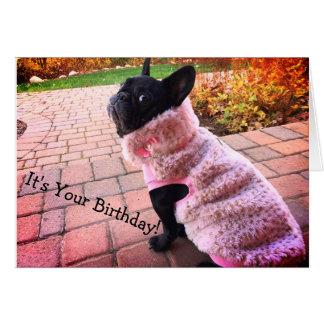 Grattis på födelsedagenfranskbulldogg hälsningskort