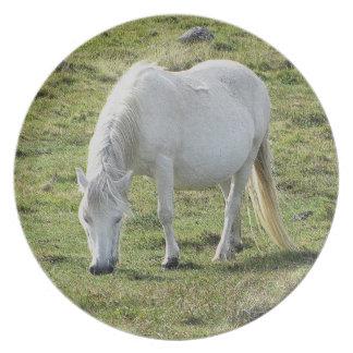 Grazeing för vitDartmoor ponny sommar Tallrik
