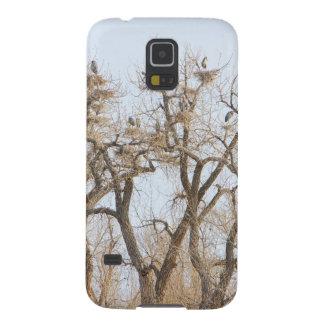 Great_Blue_Heron_Colony.jpg Galaxy S5 Fodral