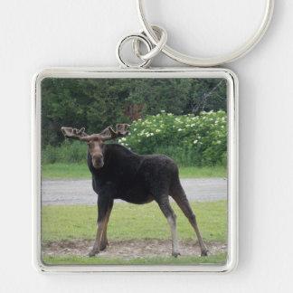 Greenville älg 2 Keychain Fyrkantig Silverfärgad Nyckelring