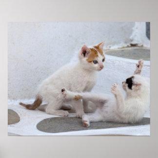 Grekland Mykonos, playing. för kattungar Poster