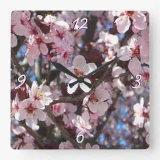 Gren av det rosa träd för blommarvårblommar fyrkantig klocka