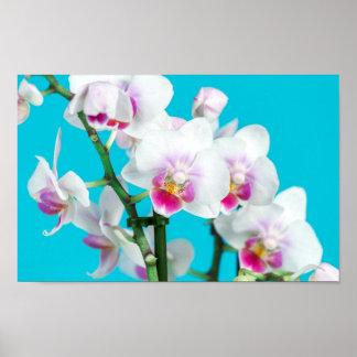 Gren av vitorchiden på aquavårfotografi poster