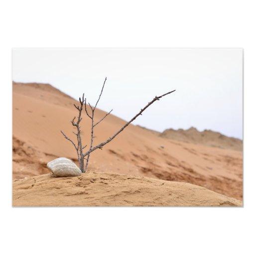 grenar för träd för ikebana för natur för sanddyns foto