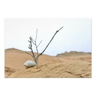 grenar för träd för ikebana för natur för sanddyns