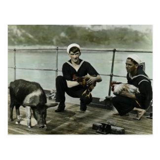 Grisen för tupp för sjöman för maskotvintage WWII Vykort