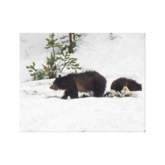 Grizzlies i den snö sträckta kanfasen canvastryck