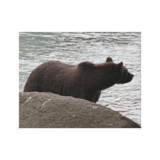 Grizzly bruntbjörn, Alaska, fotografi Canvastryck