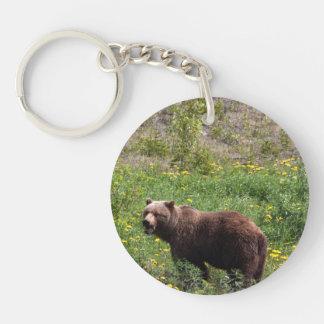Grizzly i maskrosorna