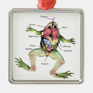 Groda anatomiillustrationen julgransprydnad metall
