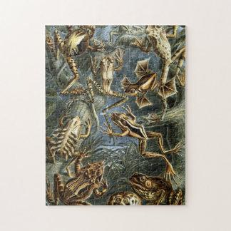Grodor av Ernst Haeckel Pussel