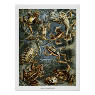 Grodor - Ernst Haeckel Poster