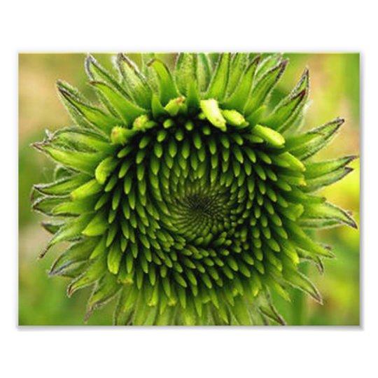 Grön blomma fototryck