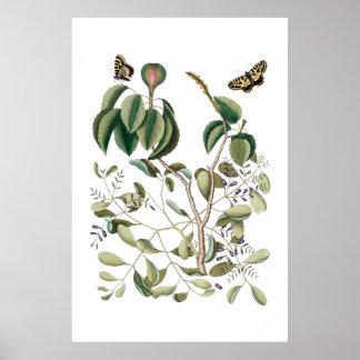 grön botanisk affisch för vintage