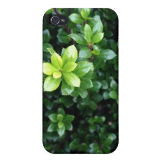 Grön grodd iPhone 4 skal