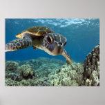Grön havssköldpadda för hawaiibo affischer