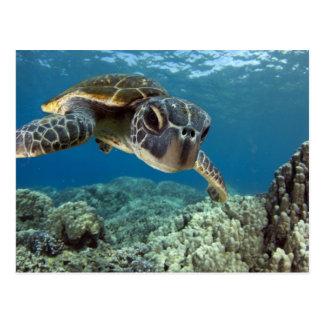 Grön havssköldpadda för hawaiibo vykort