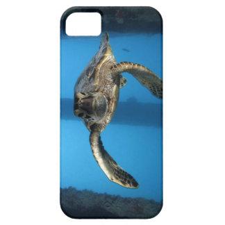 Grön havssköldpadda för tonåring iPhone 5 Case-Mate skal