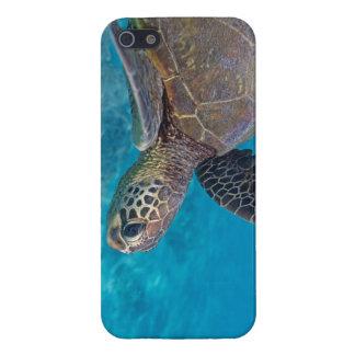 Grön havssköldpadda iPhone 5 fodral