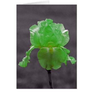 Grön Iris för limefrukt Hälsningskort