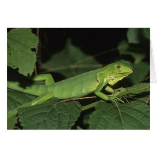 Grön leguan, (leguanleguanen), vanligt leguaner hälsningskort