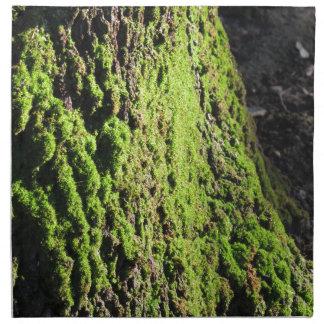 Grön moss i natur specificerar av den moss täckte tygservett